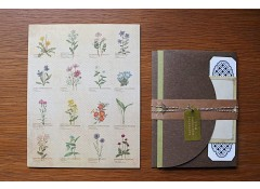 Illustrated Wild Flowers letter set